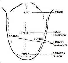 lengua-diagrama