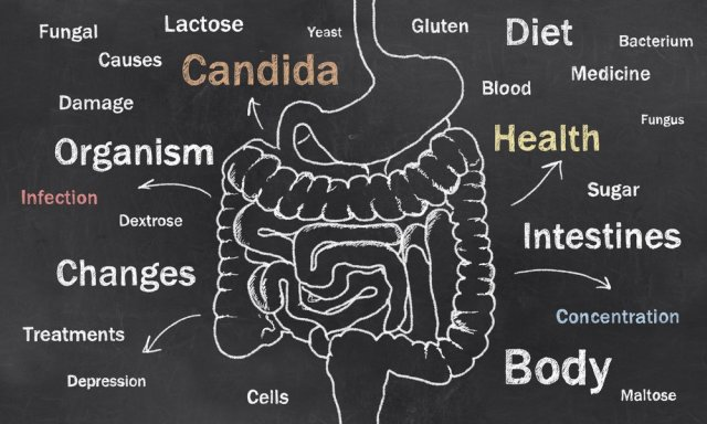 xCandida-Intestines.jpg.pagespeed.ic.MqECpYoftt