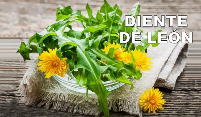 DIENTE DE LEON.jpg